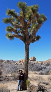Di and Yucca brevifolia