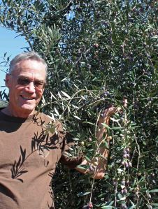 Olives at Ojai