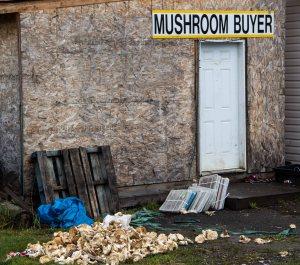 Wild mushrooms bought here