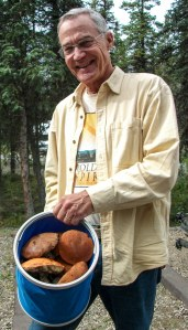 Birch Boletes collected in Denali