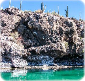 Cactus and sea