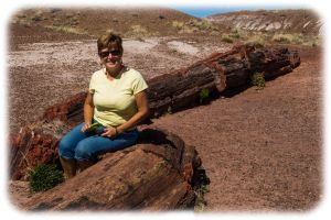 Petrified wood (sitting on)