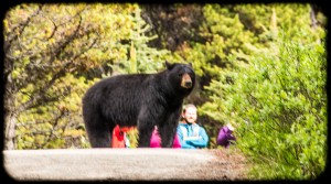 Mama bear with 2 adorable cubs on a paved trail