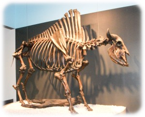 Ancient bison ancester fossils recovered from Tar Pits