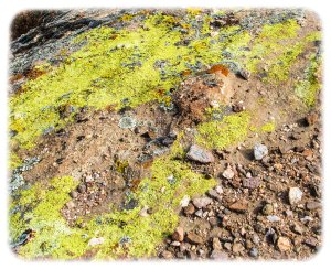 Beautiful lichen decomposing rock