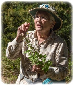 Peggy Lantz - Florida's Edible Wild Plants