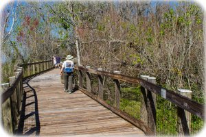 Boardwalk to Lake Apopka