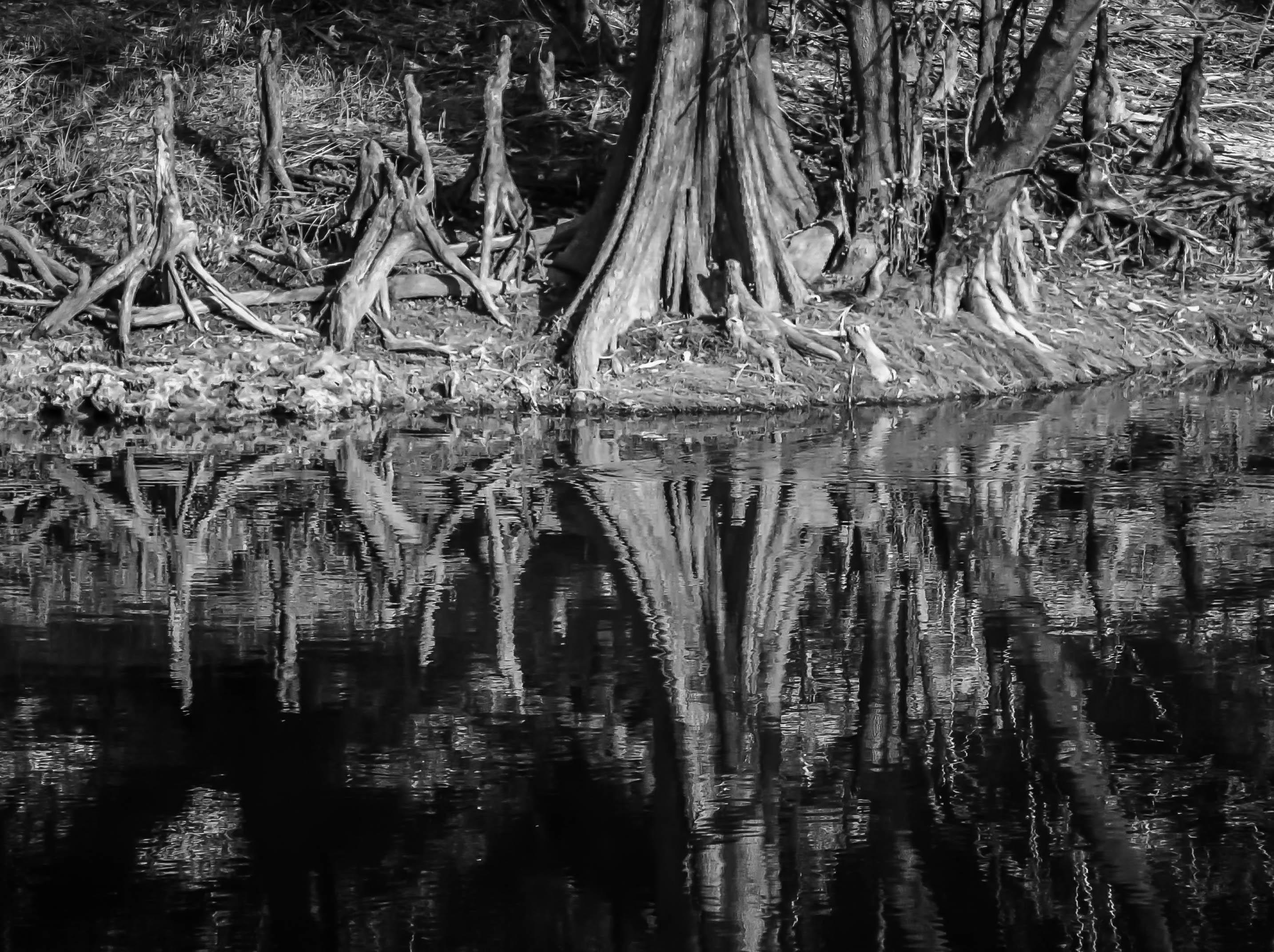 Highlands Hammock And Payne S Creek State Parks Florida
